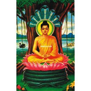 tranh-dinh-da-ld-1369